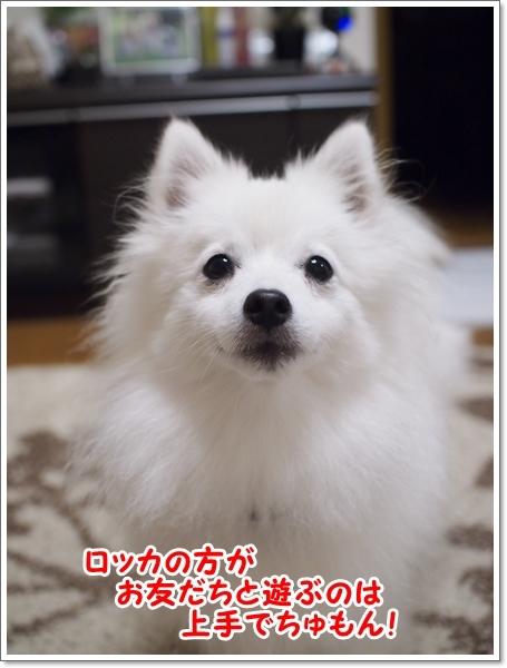 d0013149_00451307.jpg