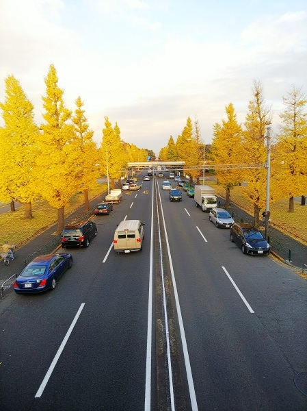 秋の展覧会のお知らせ(&駒沢公園情報)_a0213770_19101991.jpg