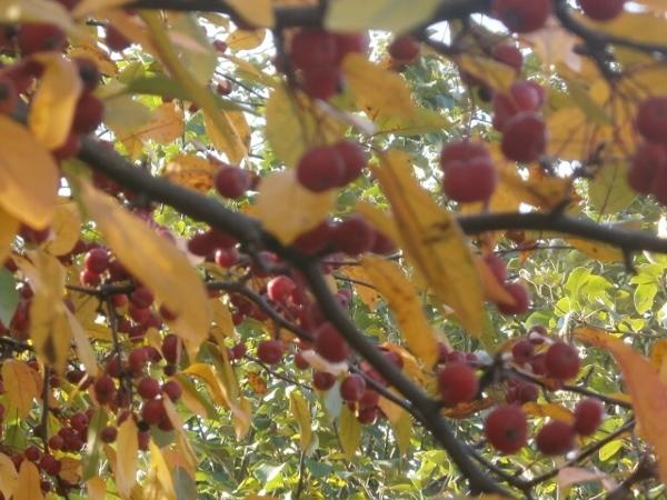 ちいさい秋 ちいさい秋 ちいさい秋見つけた_d0000995_07194357.jpg