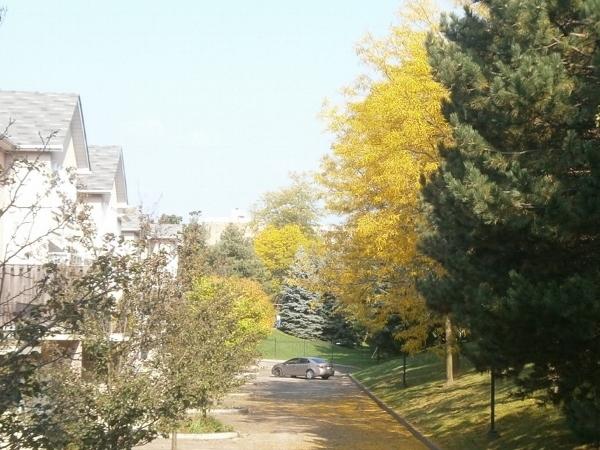 ちいさい秋 ちいさい秋 ちいさい秋見つけた_d0000995_07195866.jpg