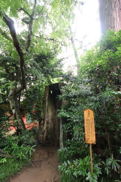 香取神宮の三本杉_a0283796_11322985.jpg
