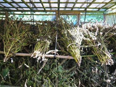 平成30年産『白エゴマ』の収穫の様子(前編:エゴマの栽培は収穫とその後の作業が大変なんです!)_a0254656_18275663.jpg