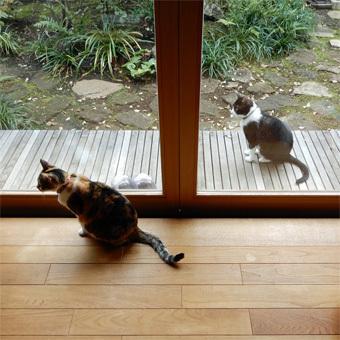 取材は猫が主役_c0195909_12020968.jpg