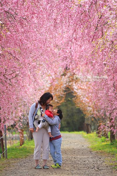 ハイジア・桜まつり フォトコンテスト。。。_b0228827_08073309.jpg