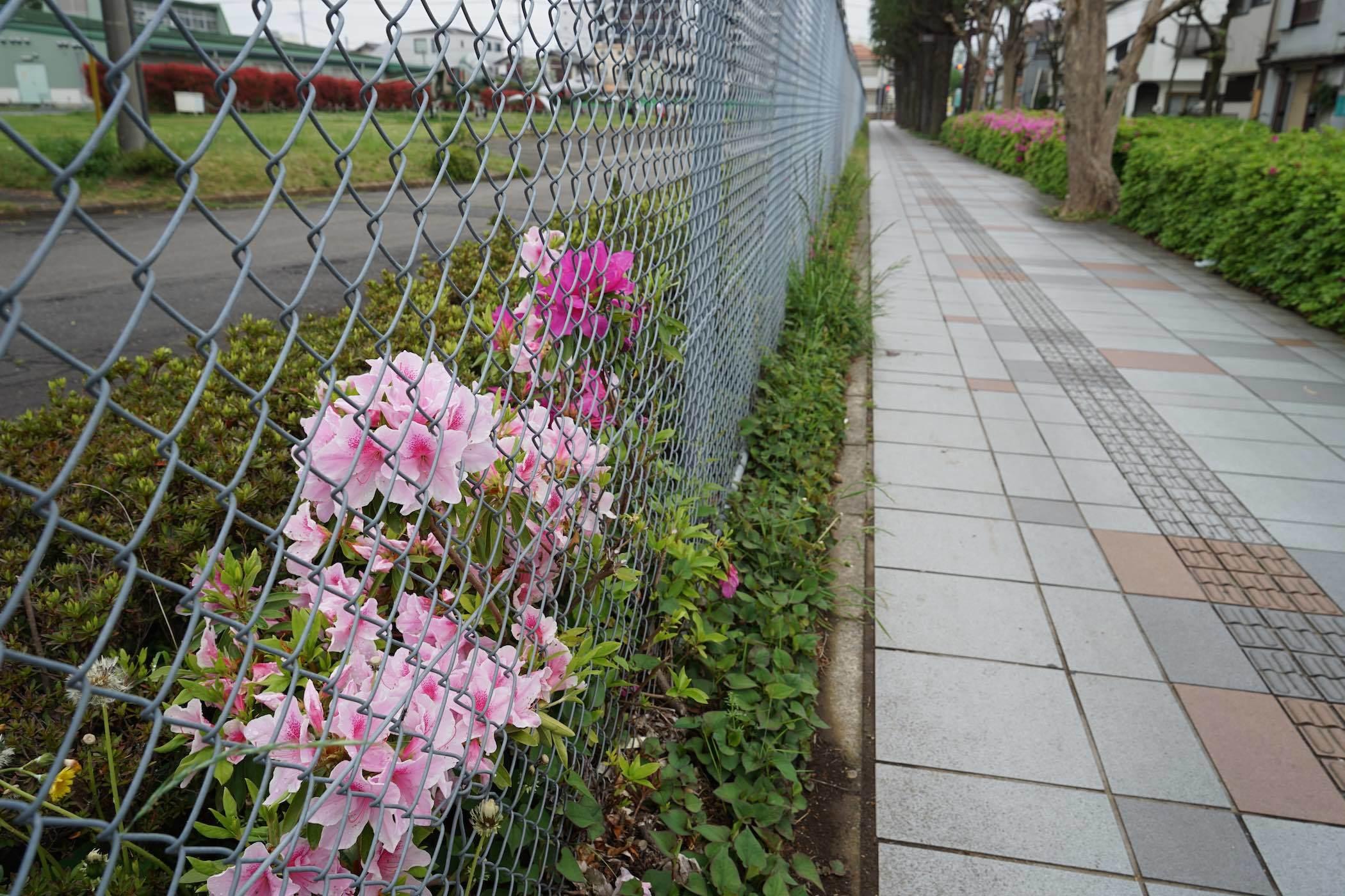 東府中駅周辺20_b0360240_22414350.jpg