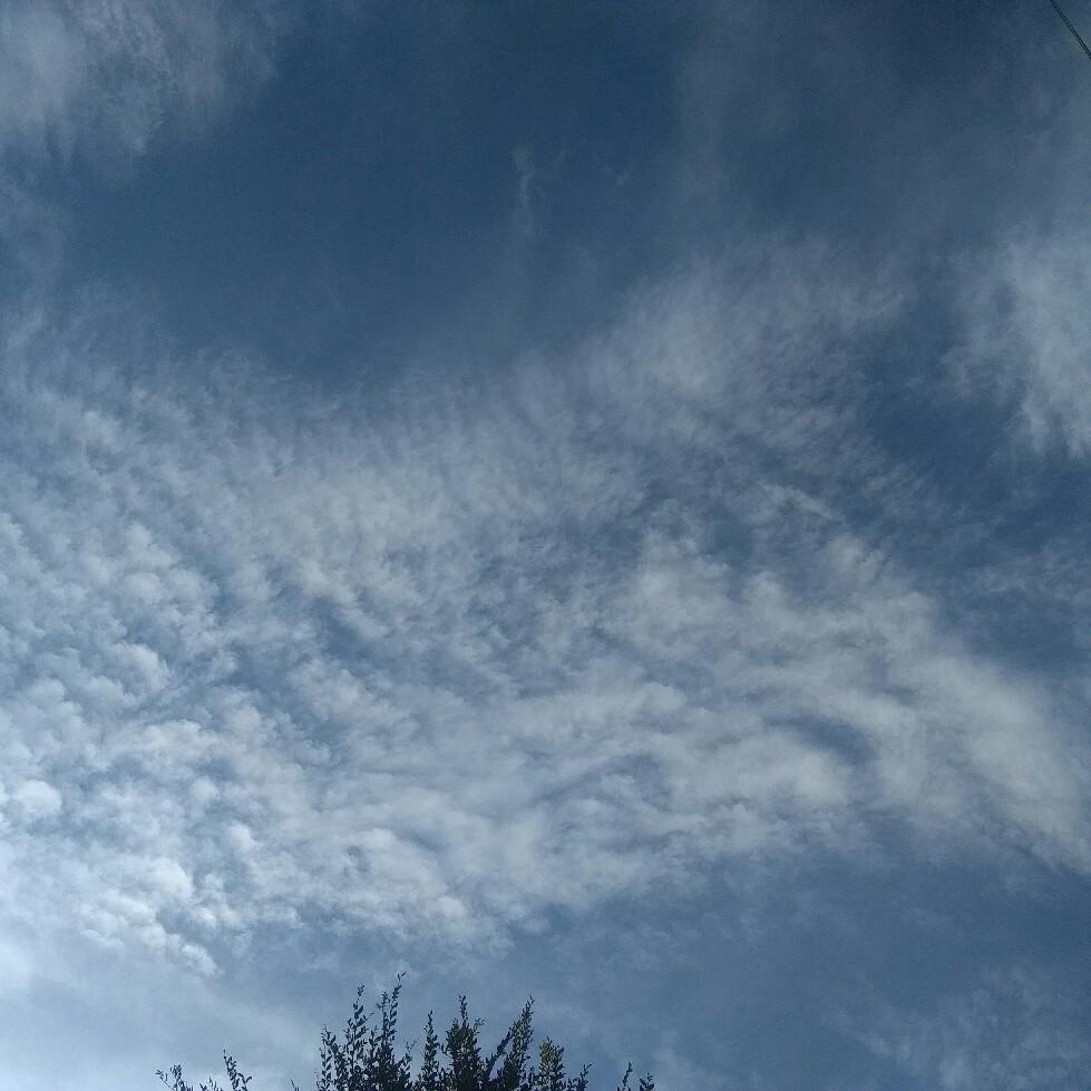 鱗雲、キレイだよ♪って一緒に遊んでる子どもに教えられた~☆_a0004752_23110527.jpg