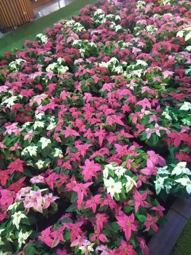 花やハロウィンの装飾がいっぱいの大阪駅でエレクトーン奏者によるエキコン~♪_a0004752_23204547.jpg