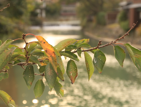 秋を感じる嵐山・・_d0202264_710019.jpg