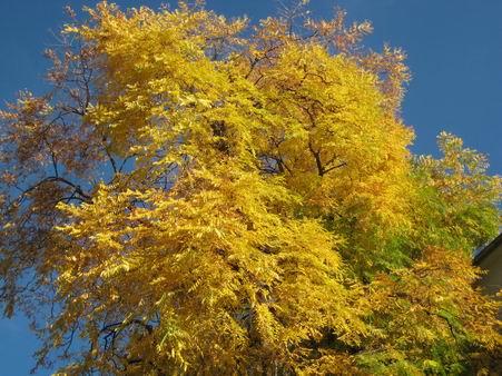 秋たけなわ_a0280569_0353251.jpg