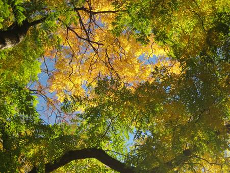 秋たけなわ_a0280569_0355276.jpg