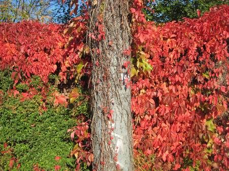 秋たけなわ_a0280569_0382878.jpg