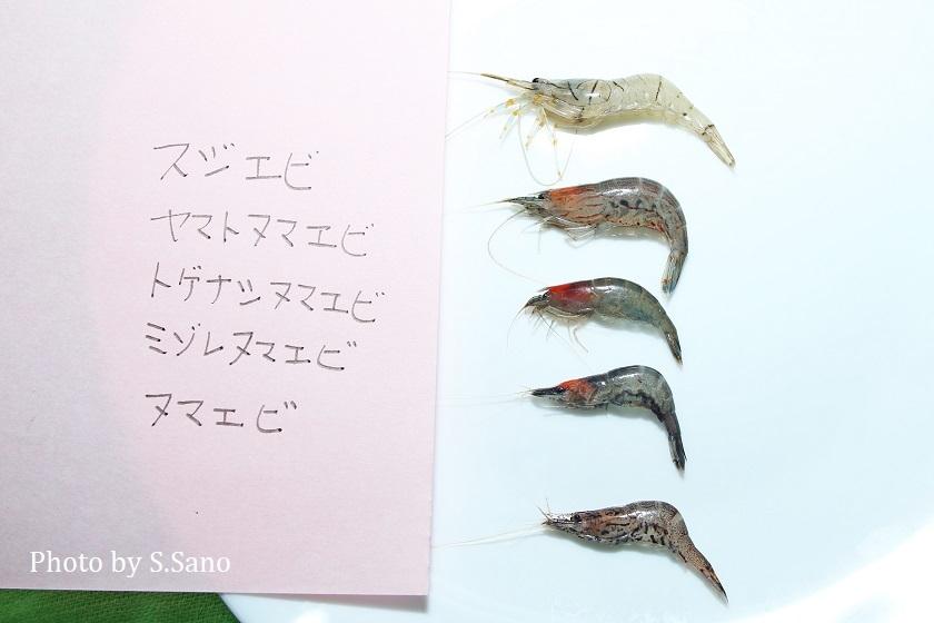 テナガエビの仲間とヌマエビの仲間を食べる_b0348205_17165335.jpg