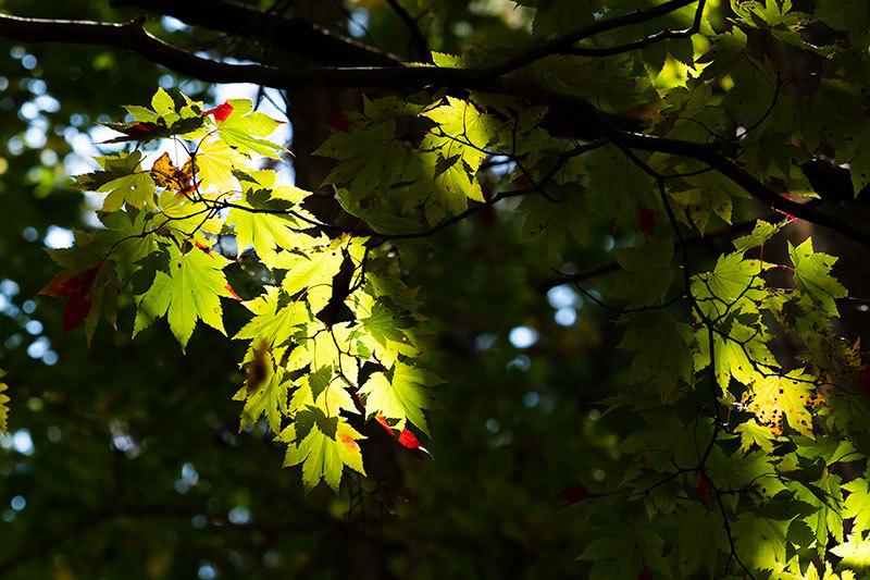 秋晴れのひと時_c0033513_22270046.jpg