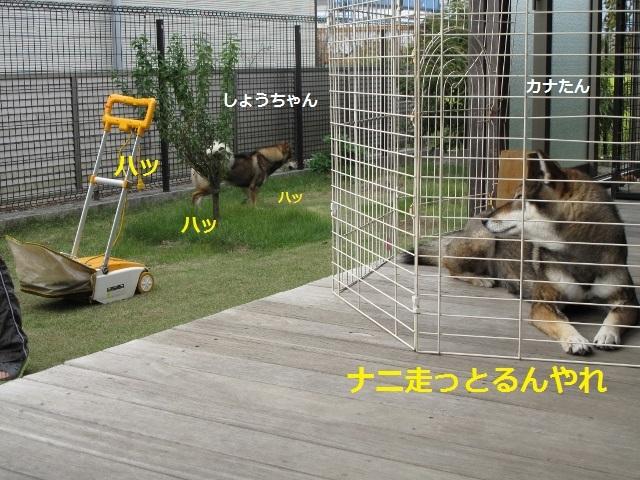 f0143123_10532903.jpg