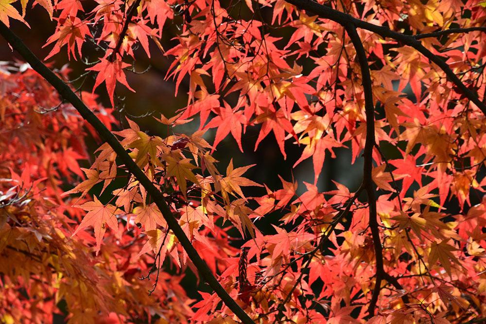幕末京都逍遥 その164 「東福寺」_e0158128_13233362.jpg
