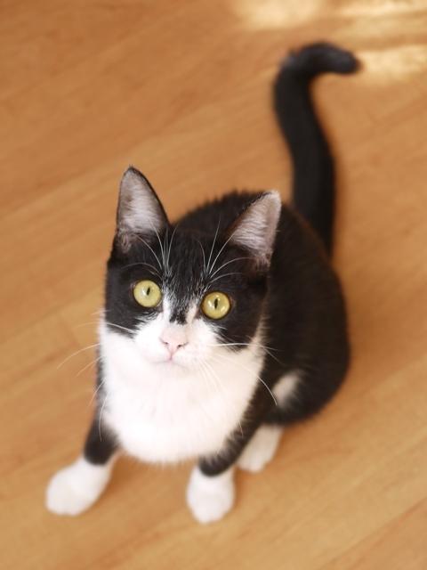 猫のお留守番 ねこ汰ちゃん編。_a0143140_16454465.jpg