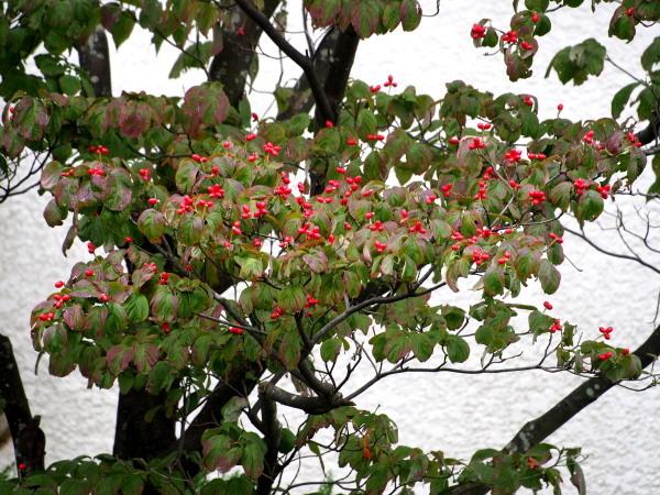 秋も深まり・・・・  近況_f0208666_18095808.jpg