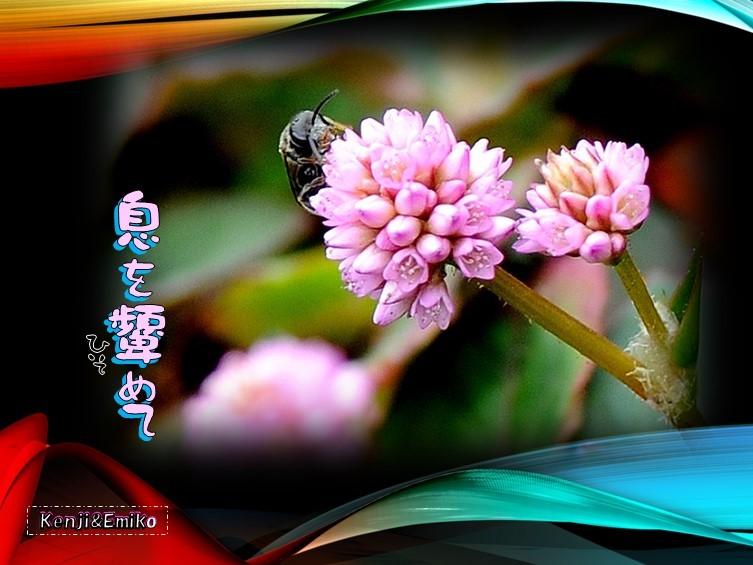 f0214467_08310619.jpg