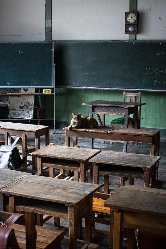 A Closed School Where An Affable Tabby Principal Lives_d0353489_10524994.jpg