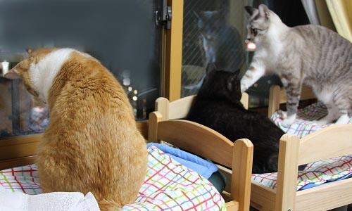 猫ベッドに( ^ω^)・・・_a0333195_21304284.jpg