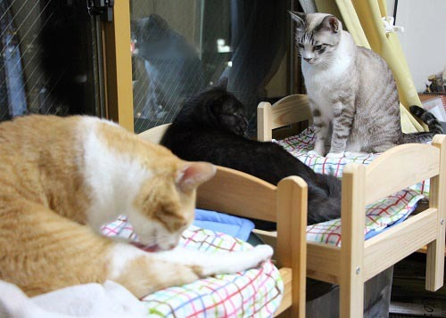 猫ベッドに( ^ω^)・・・_a0333195_21483020.jpg