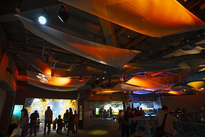 新江ノ島水族館のハロウィン②_b0145398_23325482.jpg