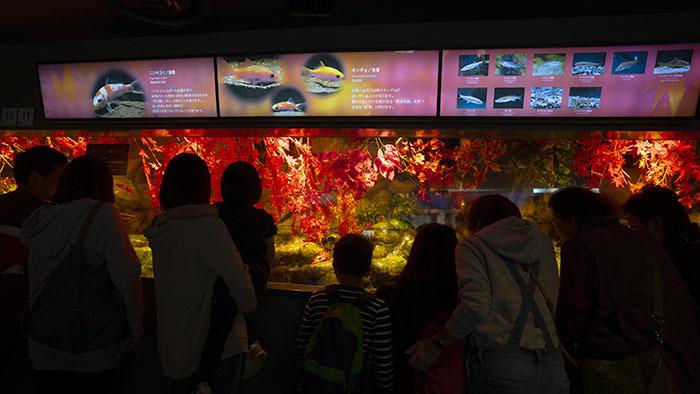新江ノ島水族館のハロウィン②_b0145398_23342319.jpg