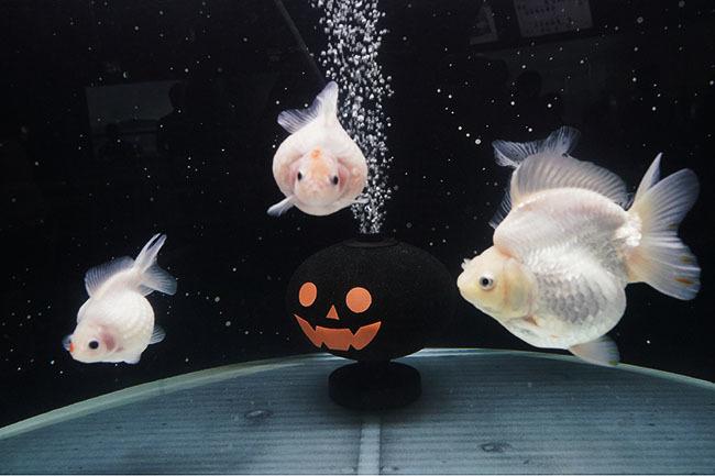 新江ノ島水族館のハロウィン②_b0145398_23433645.jpg