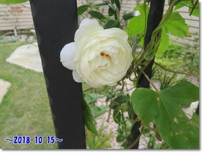 b0167519_10265991.jpg