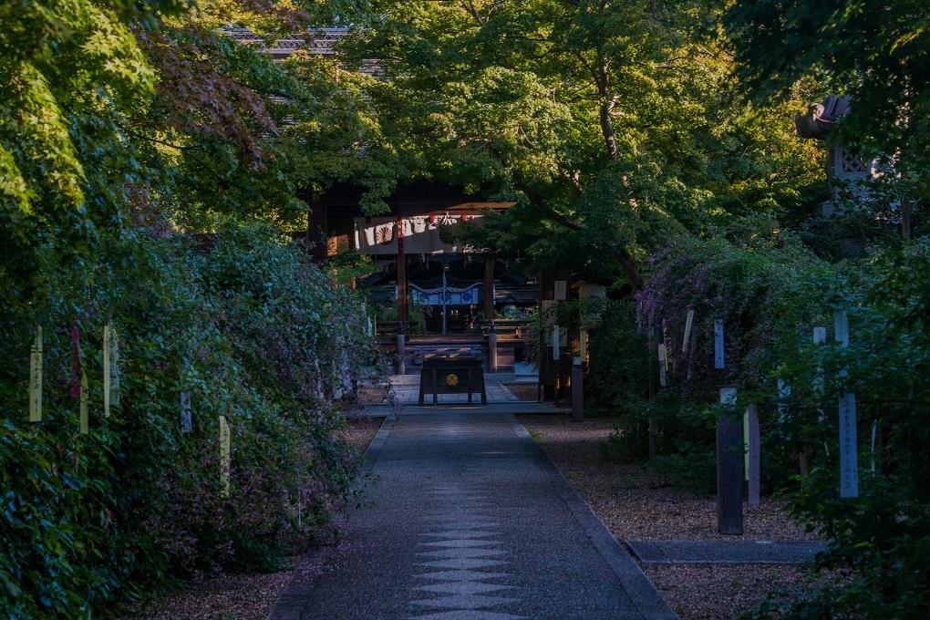梨木神社の萩_e0363038_17442837.jpg