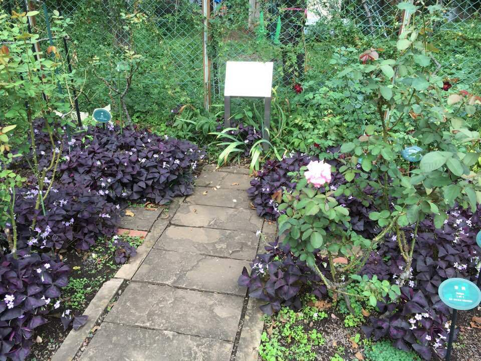 2018年10月月例会「バラの周辺整備 野ばら、植栽 草花整理」_a0094959_01243070.jpg
