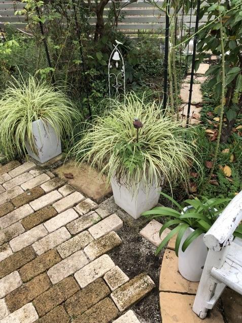 植えっぱなしで良い球根「アイフェイオン」(ハナニラ)、チューリップと種まき_a0243064_18084019.jpg