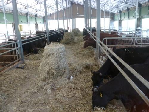 牛舎が・・・_e0252966_12584779.jpg