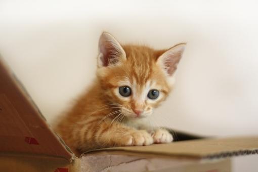 子猫塾のご案内_e0367571_18303990.jpg