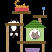 次回の猫塾のお知らせ_e0367571_20490137.png
