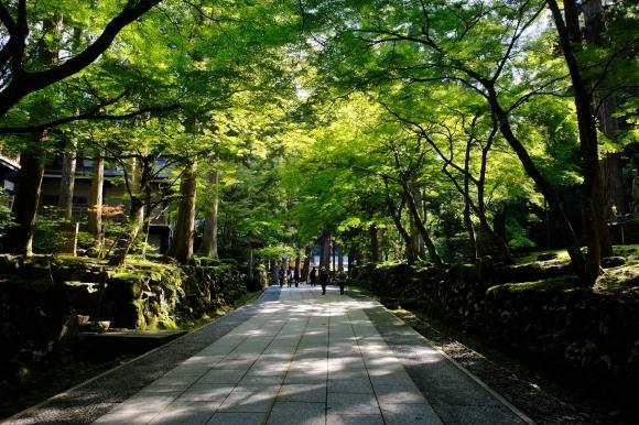 福井の旅_e0000910_12402208.jpg