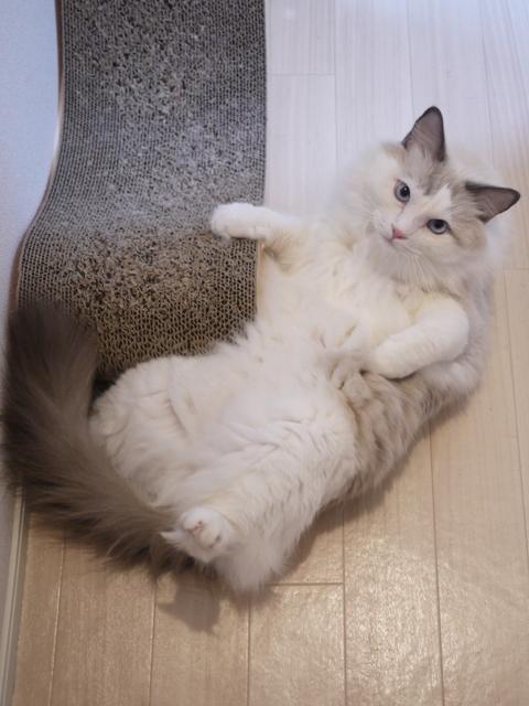 猫のお留守番 小石丸くん編。_a0143140_21305191.jpg