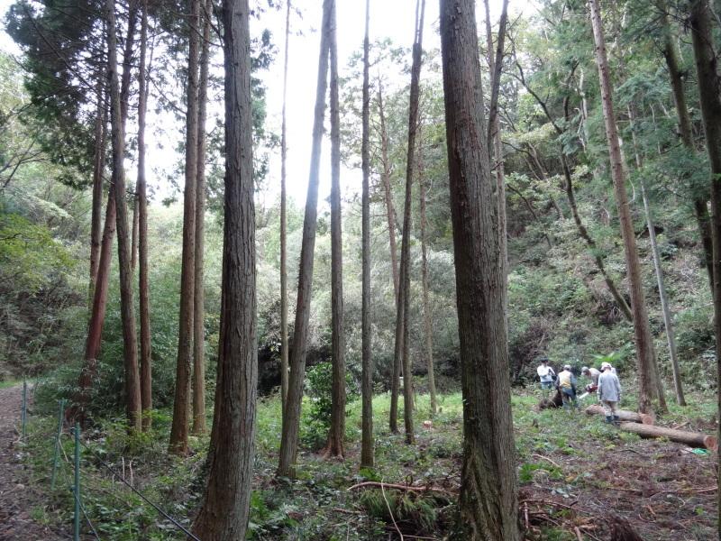 倒木の搬送・杉皮剥き・・・孝子の森_c0108460_18191421.jpg