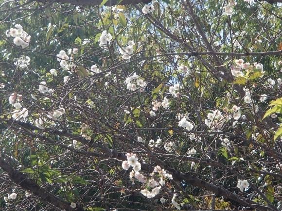 西院春日祭観賞ウオーク_b0044663_19042914.jpg