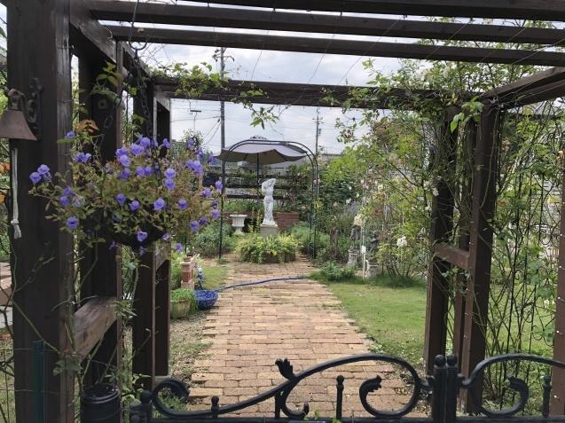 10月の庭「庭入り口の白色秋明菊が見頃になりました」_a0243064_18391404.jpg