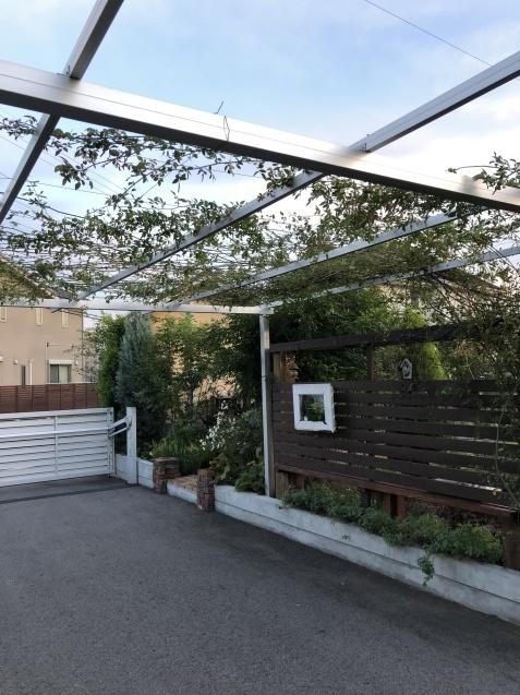 10月の庭「庭入り口の白色秋明菊が見頃になりました」_a0243064_19051435.jpg