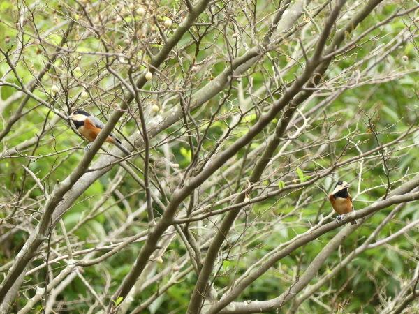 秋の野鳥たち_a0351368_23022279.jpg