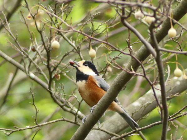 秋の野鳥たち_a0351368_23022393.jpg