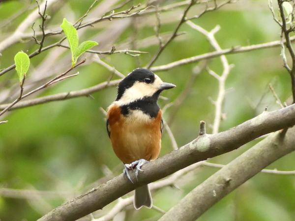 秋の野鳥たち_a0351368_23030015.jpg