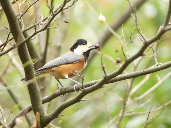 秋の野鳥たち_a0351368_23030152.jpg