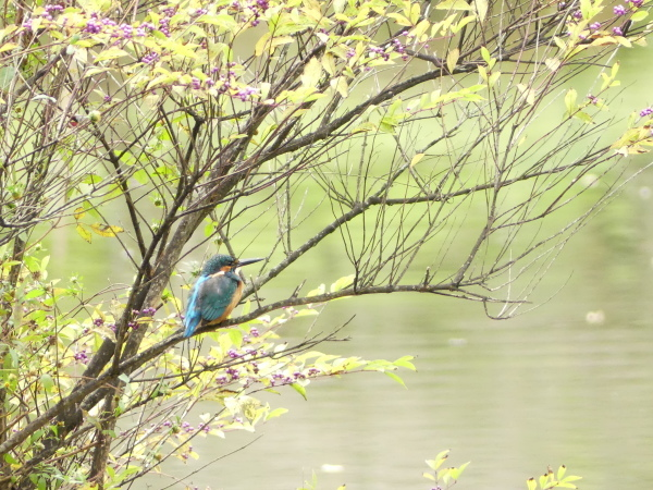 秋の野鳥たち_a0351368_23032815.jpg