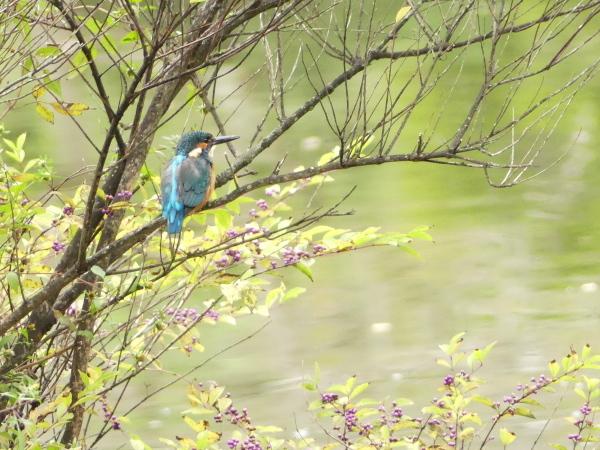 秋の野鳥たち_a0351368_23040035.jpg
