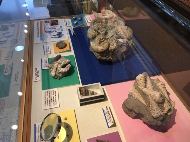 10月15日は化石の日!_d0073381_20100187.jpg