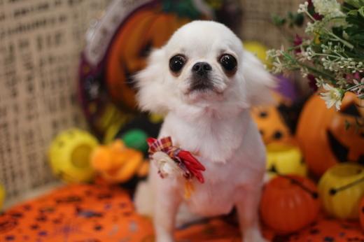 10月17日ご来店のワンちゃんです!!_b0130018_21021080.jpg