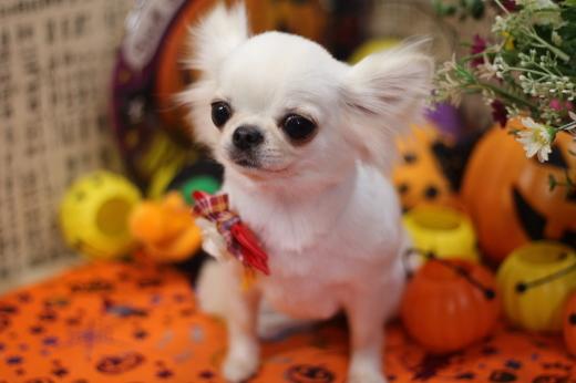 10月17日ご来店のワンちゃんです!!_b0130018_21022902.jpg